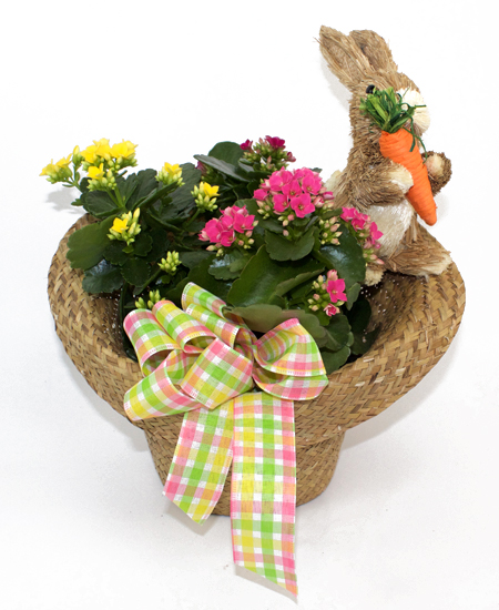Flowering plants easter kalanchoe collection rochester ny easter kalanchoe collection same day delivery negle Choice Image